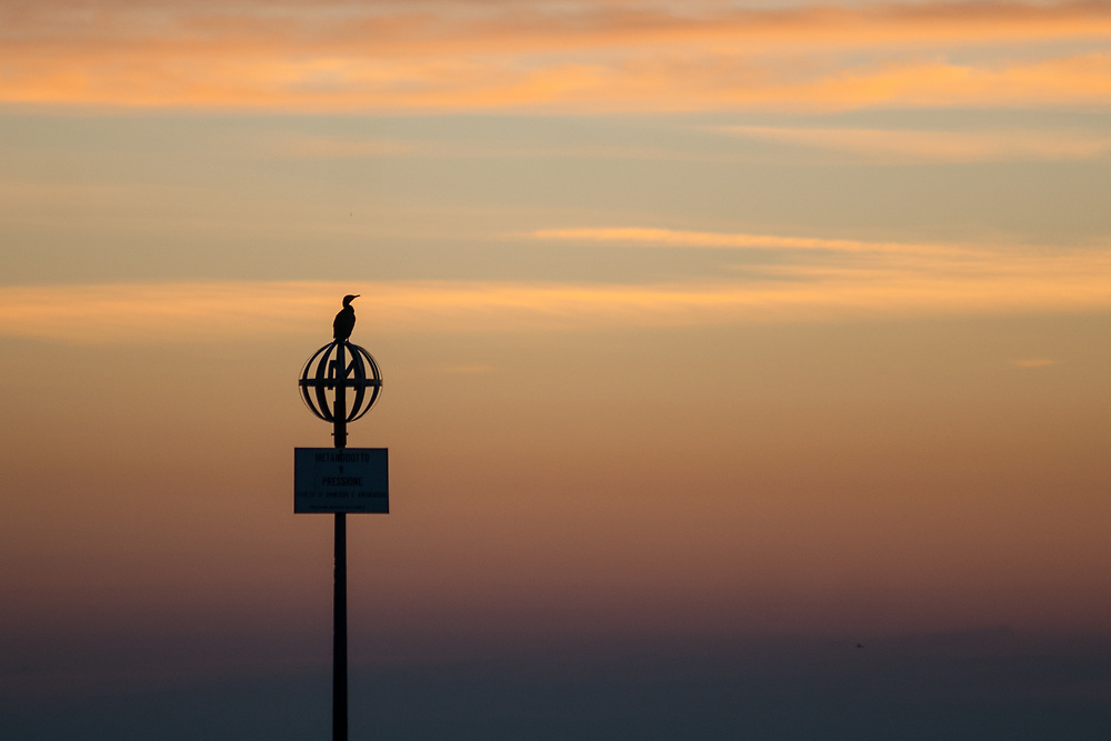 A cormorant rest on a pillar of electricity in the middle of the Venetian lagoon.