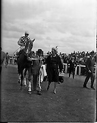 """21/06/1961<br /> 06/21/1961<br /> 21 June 1961<br /> Irish Derby at the Curragh Racecourse, Co. Kildare. Image shows """"My Highness"""" owned by Mrs Stanhope Joel, trained by Humphrey Cottrill and ridden by H. Holmes after winning the Derby. Mrs Stanhope Joel on right."""