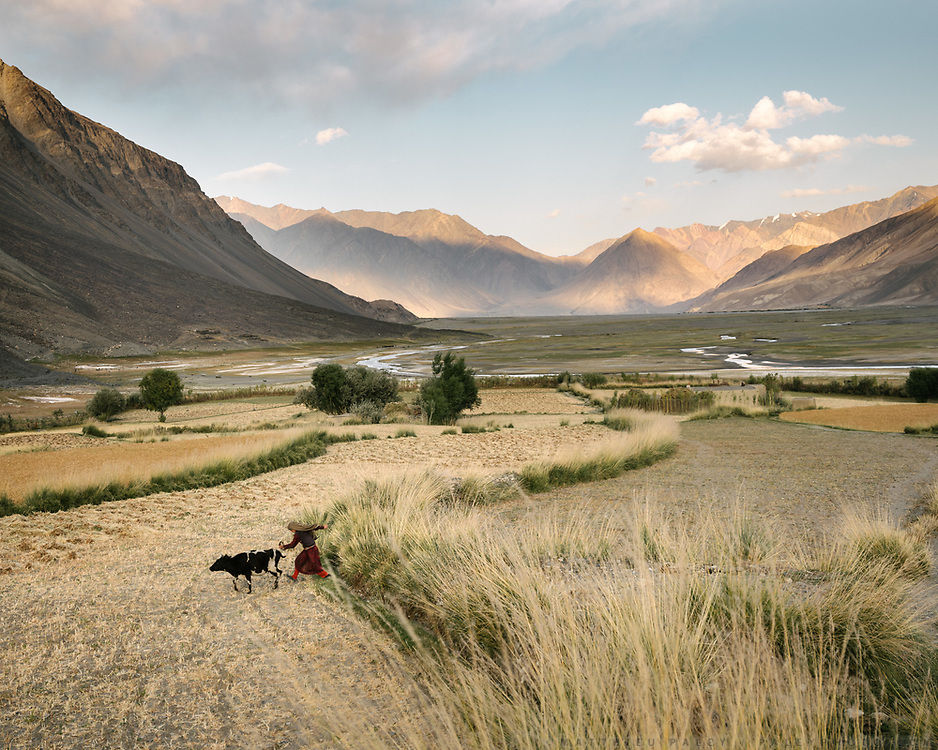 The end of the lower valley of the Wakhan – you can see the mountain walls in the distance, that's where we are heading. A girl is twisting the tail of the family cow, to make it hurry home…  The life of the Wakhi people, in the Wakhan corridor, amongst the Pamir mountains. Trekking with Paul Salopek.