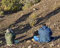 Hawaiian Goose - Nene (Branta sandvicensis). Hawaii Volcanoes National Park. Image taken with a Nikon D2xs camera and 80-400 mm VR lens.