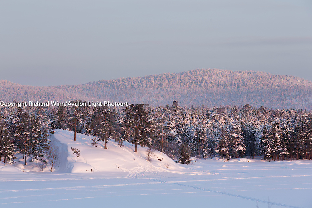 Slope on the northern bank of Lake Inari as the sun rises during a February morning.