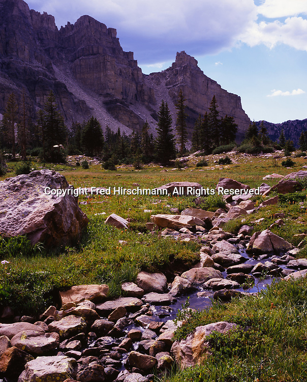Alpine meadow in the Uinta Mountains, Amethyst Basin, High Uintas Wilderness, Wasatch-Cache National Forest, Utah.