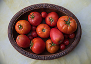 Freshly picked fresh garden tomatoes on a wooden dish on 8th August 2017 in Lagrasse, France. A member of the nightshade family, tomatoes are in fact a fruit, but their affinity for other savoury ingredients means that they are usually classed as a vegetable.