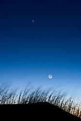 Moon and stars above grasses on dune, Monahans Sandhills State Park, Texas, USA.