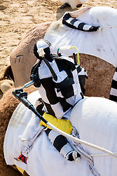 remote controlled robot jockeys at camel racing club at Al Marmoum outside Dubai  in United Arab Emirates