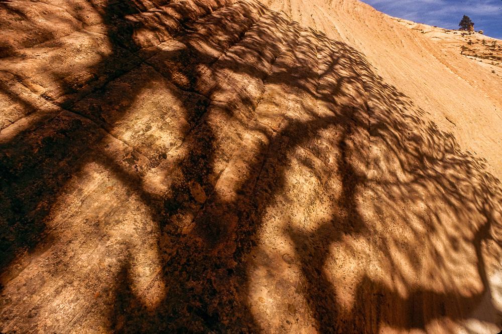 Cottonwood tree shadows, spring, Zion National Park, Utah, USA