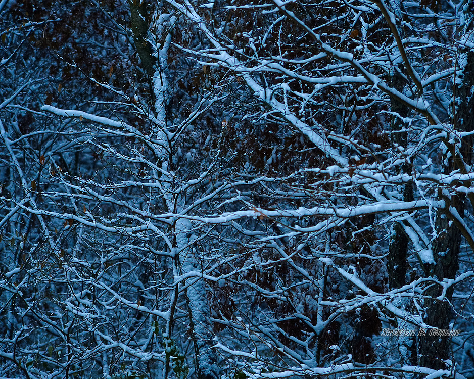 """I captured this nature portrait, along with """"Snow-Capped"""", """"Snowy Autumn Foliage"""", and """"Snowy Treetops"""", in my backyard on November 11th, 2019. After a large snowfall, I saw that a lot of the snow stuck to the trees and formed different patterns and lines that give the scene a three-dimensional appearance. I like the depth that this adds to the image the best. Due to it being unusually cold for November this day, I made the white balance of the color """"cooler"""" (more blue) to reflect this as well. I also like the way the low light of the evening made the brightness of the snow more pronounced. <br /> <br /> Printed on Hahnemühle German Etching paper. Limited to 200 productions per size.<br /> <br /> Framed prints are available in 20"""" x 16"""", 30"""" x 24"""", and 40"""" x 30"""" sizes."""