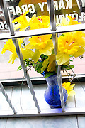 Jonquils in flower shop window.  Rawa Mazowiecka   Central Poland