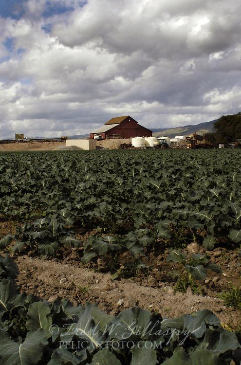 Salinas Valley Farm
