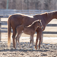 Richard Hogan Farm - Foals 2018