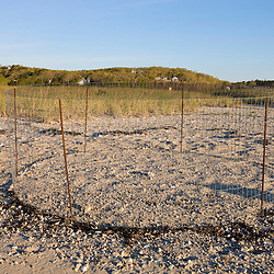 A piping plover nest exclosure at the Shifting Lots Preserve in Plymouth, Massachusetts.  Owned by the Wildlands Trust.  Cape Cod Bay.  Near Ellisville Harbor State Park.