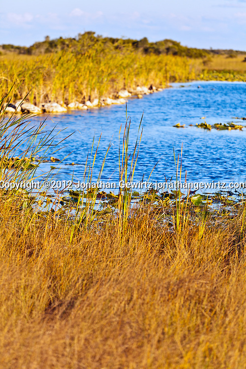 Detail of a slough (low-lying water channel) in the Shark Valley section of Everglades National Park, Florida. WATERMARKS WILL NOT APPEAR ON PRINTS OR LICENSED IMAGES.