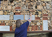 SEVENOAKS KENT. UK. Wildlife Trust staff and volunteers at Sevenoaks Wildlife Reserve in Kent create a new Guinness World Record by constructing a bee home measuring five metres by two metres. The Mayor of Sevenoaks declared the start of the record attempt at 10:00, and at around 15:00 the final measurements were taken and validated by witnesses. The bee home will be a permanent feature for the nature reserve, with bees expected to take up residence next spring. The event aims to raise the current plight of bees, with many species in serious decline, and to encourage Kents's residents to create a bee home for their own properties 17 August 2010. STEPHEN SIMPSON..