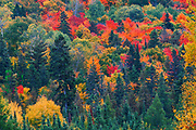 Mixedwoods in autumn<br />Mississagi Provincial Park<br />Ontario<br />Canada