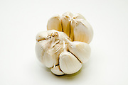 Allium sativum Garlic bulb and cloves on white background