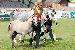 © Licensed to London News Pictures. 25/07/2019. Llanelwedd, Powys, UK. Horse events take place on the last day of the 100th Royal Welsh Agricultural Show. Founded in 1904, the Royal Welsh Agricultural Show is hailed as the largest and most prestigious event of its kind in Europe, with in excess of 200,000 visitors usually expected for the annual four day show period. Photo credit: Graham M. Lawrence/LNP