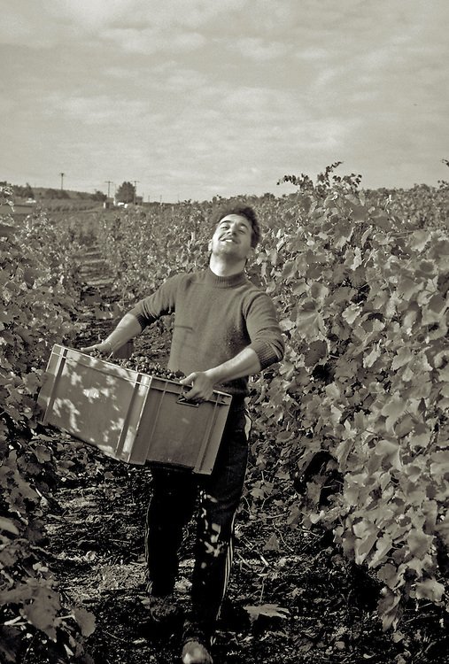 man at vendange ,carrying harvested grapes,sepia,verticle