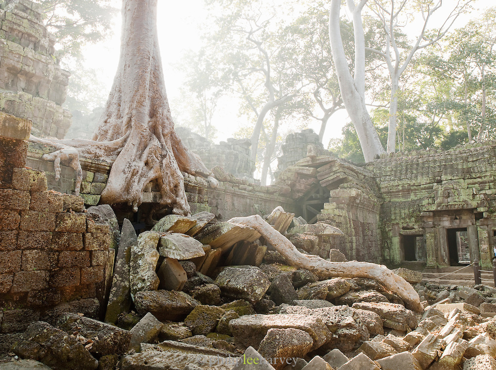 Thick tree roots grow through the ruins of Ta Prohm temple at Angkor, Siem Reap Province, Cambodia
