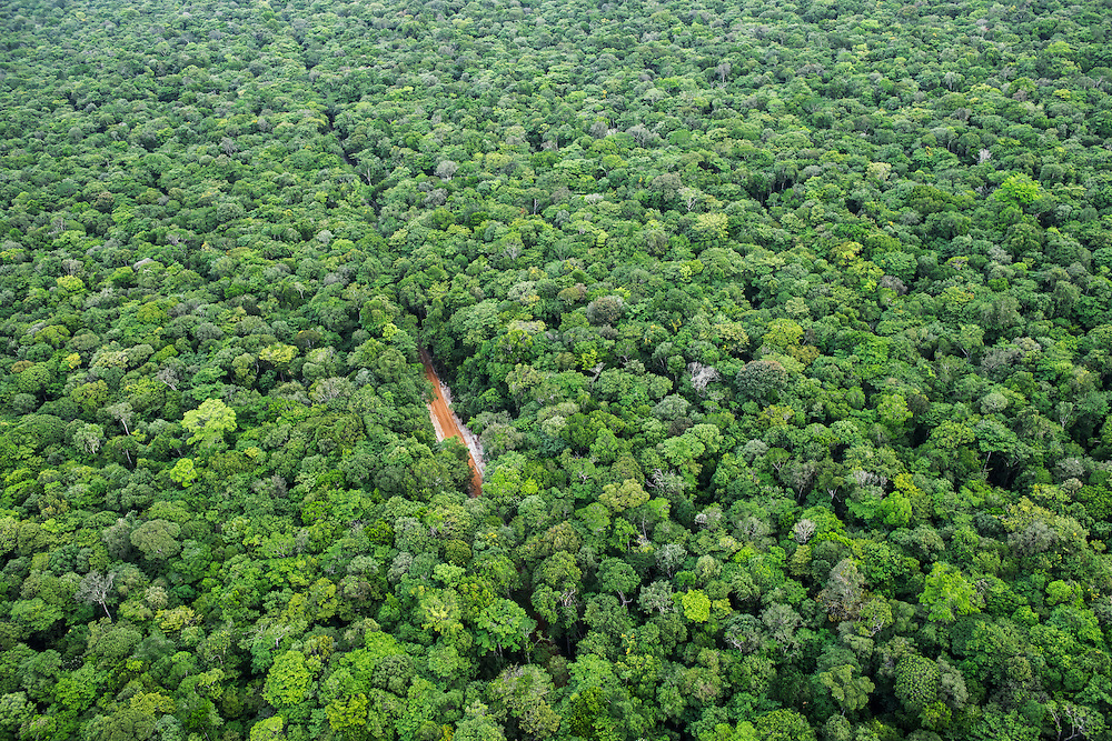 Dirt Road through rainforest<br /> GUYANA<br /> South America