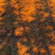 Fir tree shadows at sunrise along Hurricane Ridge in Olympic National Park, Washington.