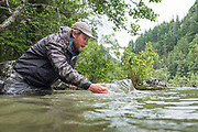 David Page releases a large chinook salmon caught on BC's Dean River.