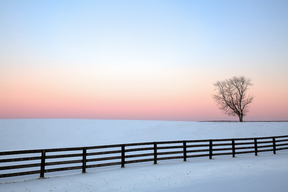 A lone tree stands witness to the pink blush of a winter's twilight in rural Virginia