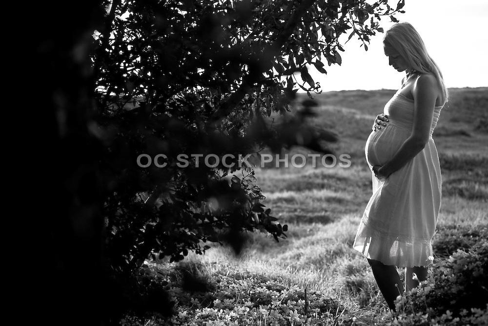 Woman Pregnant In Field