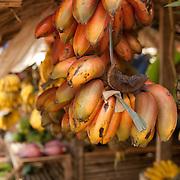 Bananas, Palawan, Philippines