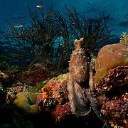 Dive Spot: Fiabacet