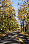 Fall leaves turn yellow along the Blue Ridge Parkway (near Milepost 50) in Virginia, in the Blue Ridge Mountains (a subset of the Appalachian Mountains), USA. The scenic 469-mile Blue Ridge Parkway was built 1935-1987 to aesthetically connect Shenandoah National Park (in Virginia) with Great Smoky Mountains National Park in North Carolina, following crestlines and the Appalachian Trail.