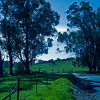 Pastures and Eucalyptus trees line a road meandering through the East Bay foothills near Martinez, California.