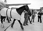 Equine superstar: the Aga Khan's horse, Shergar, arriving at Dublin Airport, en route to the Sweeps Derby at the Curragh, County Kildare.<br /> 25 June 1981