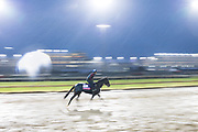 November 1-3, 2018: Breeders' Cup Horse Racing World Championships. My Gal Betty