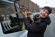 Two Chihuahua dogs looking out of the window of their owners van in Hackney are visited by a woman owner with here own in East London, England, United Kingdom. The Chihuahua is the smallest breed of dog and is named for the state of Chihuahua. Chihuahuas come in a wide variety of sizes, colors, and coat lengths. (photo by Mike Kemp/In Pictures via Getty Images)