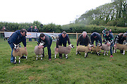 Farmers with their ewes line up for the Mayo Mule & Greface Group judging at  'SHEEP2015', the major National Sheep Open Day hosted by Teagasc at Athenry on Saturday. Photo:- Andrew Downes / xposure.ie  No Fee. Issued on behalf of Teagas