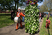 May Day custom of Deptford Jack in the Green, a man encased in a framework entirely covered with greenery, is one of the lesser-known modern revivals by the Blackheath Morris Men of English traditional customs on May 1st 2016 in London, United Kingdom. The procession begine, working its route through Deptford. Fowlers Troop Jack in the Green was revived in the early 1980s. Originally a revival from about 1906, it developed from the 17th Century custom of milkmaids going out on May Day with the utensils of their trade, decorated with garlands of flowers and piled into a pyramid which they carried on their heads. By the mid eighteenth century other groups, notably chimney sweeps, were moving in on the milkmaids territory as they saw May Day as a good opportunity to collect money, so carried a Jack in the Green. Over the last 25 years several popular festivals have grown up around the Jack in the Green tradition. Deptford Jack in the Green is not very widely known although it has been running since the early 1980s.