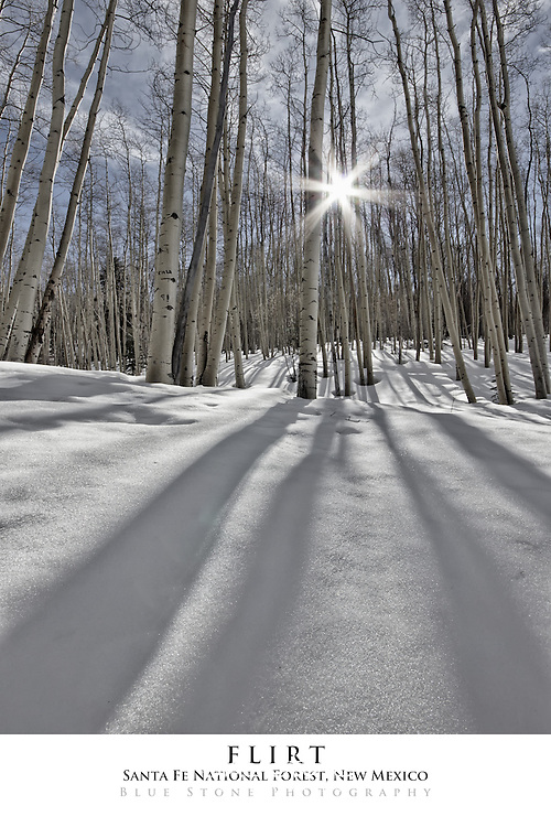 20x30 poster print of aspens, snow and sunburst.