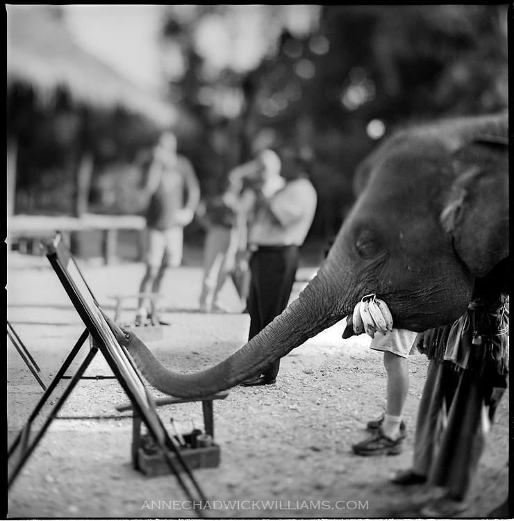 An Asian elephant paints in an elephant camp near Chaing Mai, Thailand as tourists watch