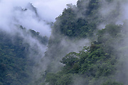 Rain Forest at Dawn<br />