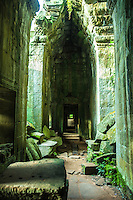 """Corridor at Ta Prohm - Ta Prohm is the modern name of what was originally called Rajavihar. Built in the Bayon style largely in the late 12th and early 13th centuries Ta Prohm was founded by King Jayavarman VII as a Mahayana Buddhist monastery and university. Unlike most renovated Angkor temples Ta Prohm has been left in pretty much the same condition in which it was found. One reason for this is that the roots and trees have become so much a part of the structures that, if removed the structures would lose their integrity. The photogenic and atmospheric combination of trees growing out of the ruins and the natural surroundings have made the temple one of Angkor's most popular with visitors. The trees growing out of the ruins are perhaps the most distinctive feature of Ta Prohm, and """"have prompted more writers to descriptive excess than any other feature of Angkor."""" Two species predominate but sources disagree on their identification. The larger is either the silk cotton tree ceiba pentandra or Tetrameles nudiflora and the smaller is either the strangler fig (Ficus gibbosa) or Gold Apple Diospyros decandra."""