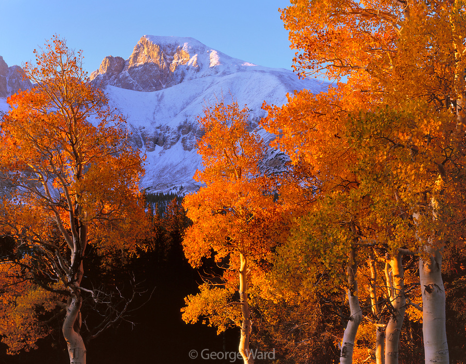 Sunrise on Aspens and Wheeler Peak, Great Basin National Park, Nevada