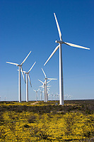 Electric Windfarms and wildflowers, near McCamey, Texas