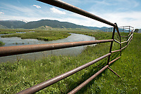 """A large fence enclosure erected last week on the National Elk Refuge will protect about 300 willow """"poles"""" planted the same day along a section of Flat Creek from elk that forage on the refuge in the winter. Thewillows """"poles"""" were planted as part of an experimental river bank restoration project."""