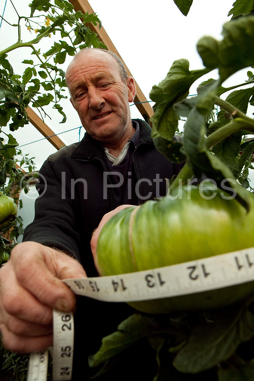 Jo Atherton, works a part time at nursery, but his passion is for  growing giant vegetables, He has  grown a  record breaking carrot 19', 2'' long and is also a devotee of leek growing and onions. He was set back recently when local kids stole a thousand pounds worth of lighting diverted most likely to grow marijuana plants. He is pictured preparing for the biggest giant veg event of the year, the Bath and West show. Giant vegetable growing is not a hobby for the faint hearted. The growers have to tend to the vegetables almost every day (including Christmas) spending up to 80 hours a week, tending, nurturing, growing and spending thousands on fertilisers, electricity and green houses. The reward is to be crowned world record holder of largest, longest or heaviest in class, cabbages weighing in at 100lb, carrots stretching 19 ft and pumpkins tipping the scales at 800lb.