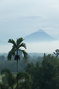 View of Merbabu volcano through the forest, Borobudur, Kedu Valley, South Central Java, Java, Indonesia, Southeast Asia