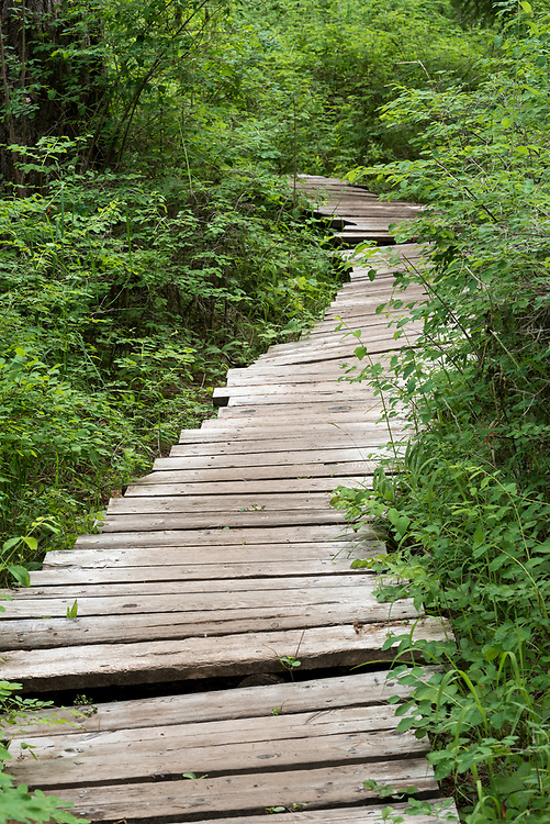 Wooden boardwalk trail at the Minam River Lodge in Oregon's Wallowa Mountains.