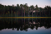 """Reflections of pine forest and narrow line of marsh in small lake at dusk, nature reserve """"Augstroze"""", Latvia Ⓒ Davis Ulands   davisulands.com"""