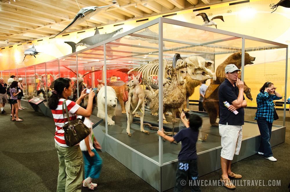 Animals on display in the Queensland Museum