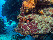 Coral reef, Underwater Arches in Cozumel, MX,