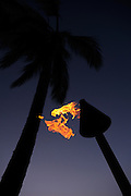 Coconut Palm tree and burning oil lamp in silhouette at sunset. Kona, Big Island, Hawaii